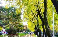 Bulevar Svetog Petra Cetinjskog među 49 najmagičnijih svjetskih ulica